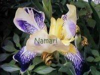 Namari